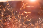 Wheat field in Cincovillas, Spain — Stock Photo