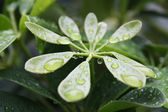 Leaves, leaf, nature, natural, rain, dew, water, drops, fresh, close up, macro, plant, morning — Stock Photo