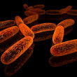 Bacillus — Stock Photo #15631603