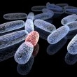 Mutated bacteria — Stock Photo