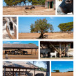 Farm and wild animals collection — Stok fotoğraf