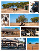 Fazenda e coleção de animais selvagens — Foto Stock