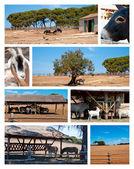 çiftlik ve vahşi hayvan koleksiyonu — Stok fotoğraf