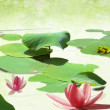 Water Lily banner on grunge textured canvas — Stock Photo