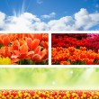 Landscape spring nature banners — Stock Photo