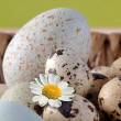 Eggs in a basket — Foto Stock
