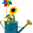 Stock Photo: Watering cwith sunflower