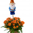 Garden gnome with flowers — Stock Photo