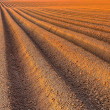 Plough agriculture field before sowing — Stock Photo #40201429