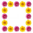 Pink and yellow  flowers  frame isolated on white background. — Stock Photo