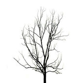 Dead Tree without Leaves — Stock Photo