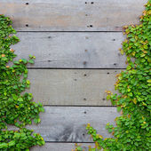 The Green Creeper Plant on wood background — Stock Photo
