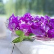 Bougainvillea In Spa — Stock Photo