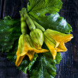 Picked From The Garden, Zucchini Flowers — Stock Photo