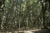 Woods on the Mediterranean coast  — Stock Photo