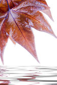 The leaves in the autumn season  — Stock Photo