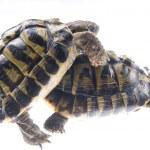 Turtle reptile — Stock Photo #6910188