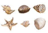Seas shells watercolor — Stock Photo