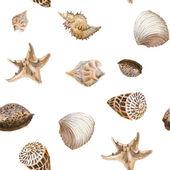 Shells background — Stock Photo