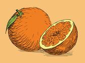 Hand drawn citrus orange — Stock Vector