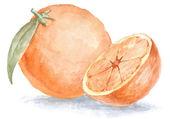 Watercolor oranges — Stock Photo