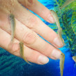 Stock Photo: Manicure fish spbeauty treatment