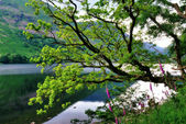 Oak Tree and Foxgloves by a Lake — Stock Photo