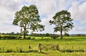 Trees and a field gate in rural English landscape — Stock Photo