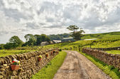 Country lane bordered by stone walls and fields. — Stock Photo