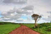 Farm track running between lush green fields. — Stock Photo
