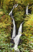 Stock Ghyll Force, Ambleside, Cumbria. — Stock Photo