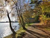 Trees at Talkin Tarn on an Autumn day. — Stock Photo