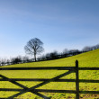 View of a field gate with tree — Stok fotoğraf