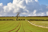 Pastoral scene in English Countryside — Stock Photo