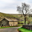 Barn and tree in the Yorkshire Dales — Stock Photo