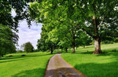 Avenue of trees with a road running through — Foto Stock