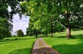 Avenida de árvores com uma estrada que cortava — Fotografia Stock