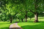 Estrada estreita que atravessa uma avenida de árvores — Fotografia Stock