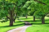 Avenida de árvores com uma estrada sinuosa através — Fotografia Stock
