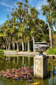 Palms in Logan Botanic Gardens — Stock Photo