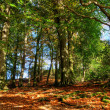 Autumn woodland scene — Stock Photo