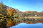 Autumn tree reflected in Grasmere — Stock Photo