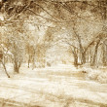 Snowy winter — Stock Photo #6750508