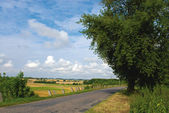 Road field sky and tree — Stock Photo