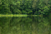 Lake and forest — Stock Photo