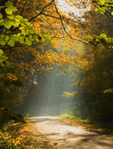 Autumn forest and sunbeam — Stock fotografie