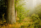 Mist forest — Stock Photo