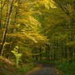 Autumn forest and road — Stock Photo