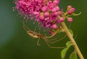 Spinne - kleine Räuber — Stockfoto