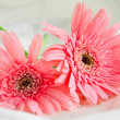 Two Pink Flowers — Stock Photo #30022821
